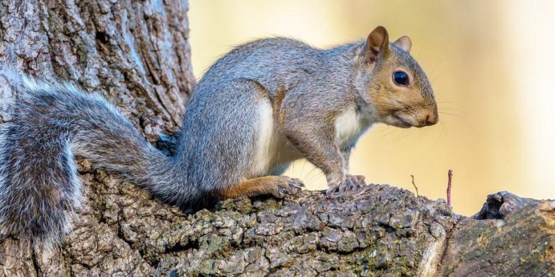 Squirrels in Backyard