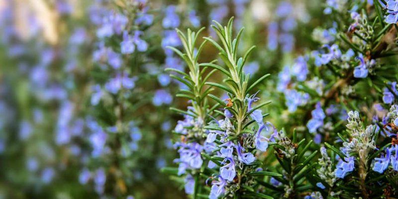 Plants That Repel Ticks: Top 10 Picks and Tricks! 2020