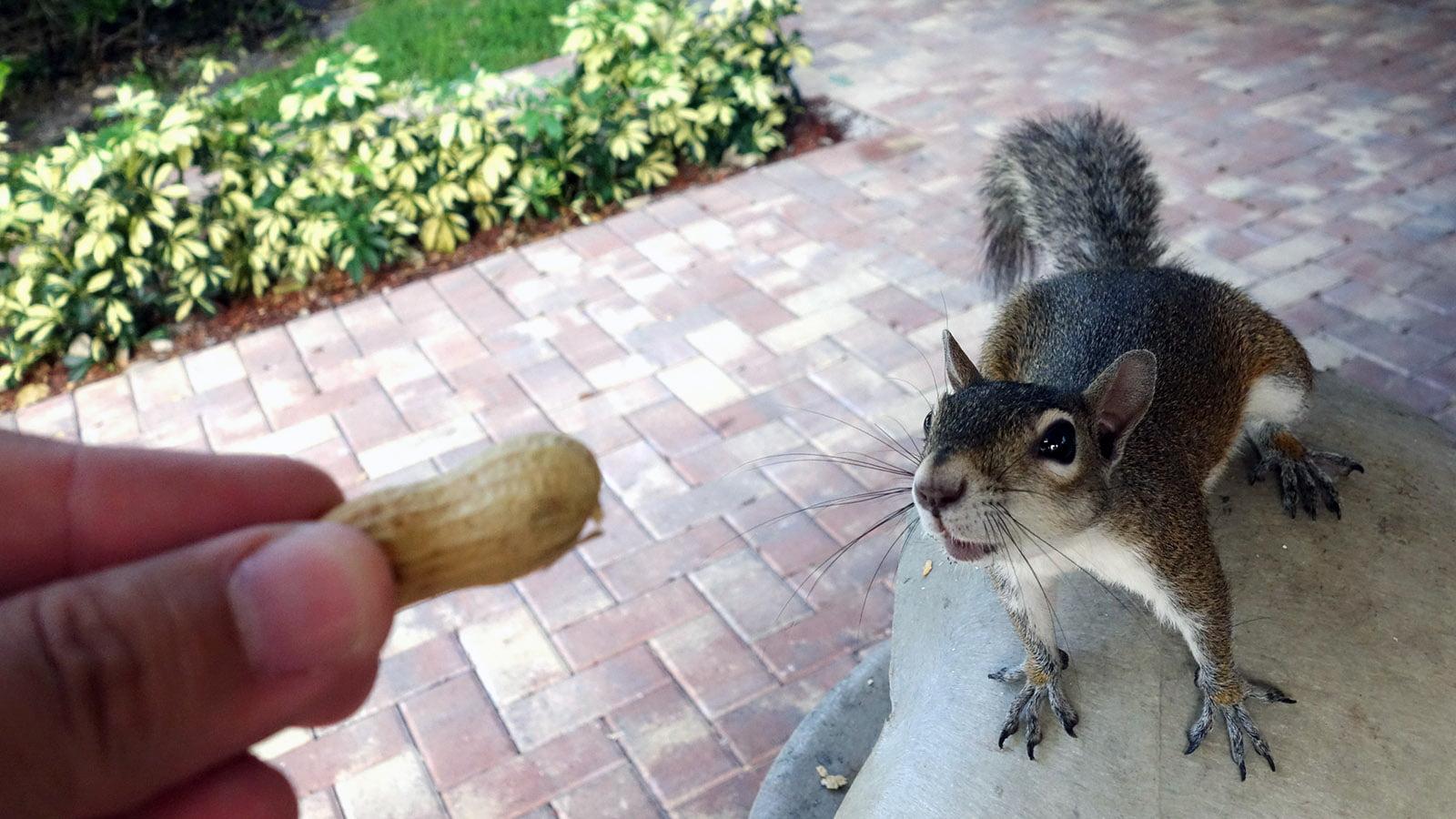 Feed Squirrel
