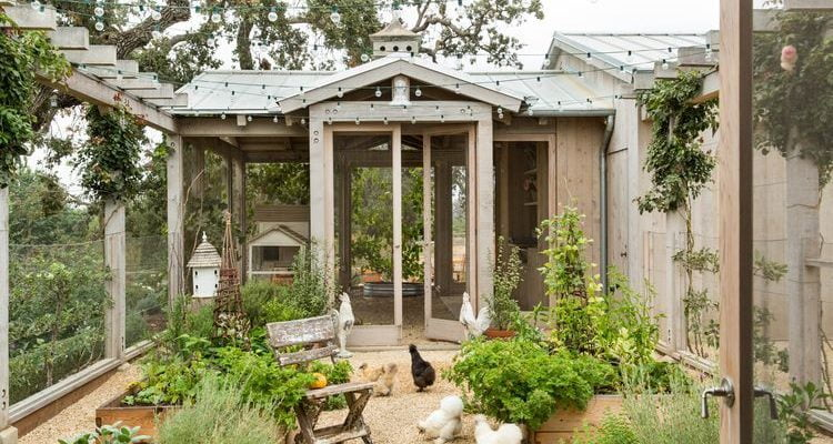 14 Awesome Chicken Coop Plans: Detailed List