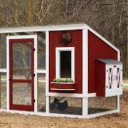 Chicken Run Plans: 10+ Ideas for Chicken Coop