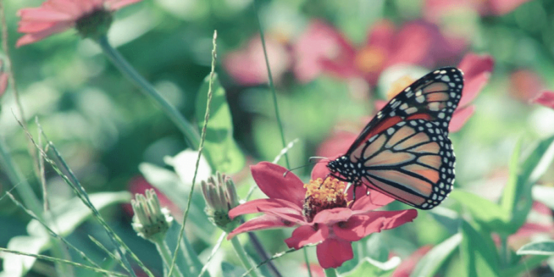 Everything You Need to Know About Indoor Butterfly Gardening