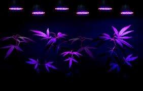 G8LED, 240 Watt Grow Light Review 2020