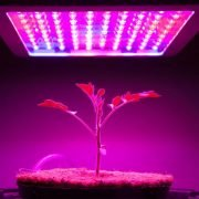 Grow Lights VS Regular Lights: The Best Lighting for your Needs