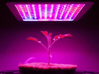 Grow Lights VS Regular Lights: The Best Lighting for your Needs