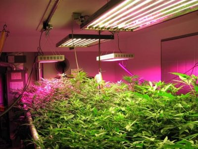 Guide to Growing Plants Indoors with Artificial Lights?