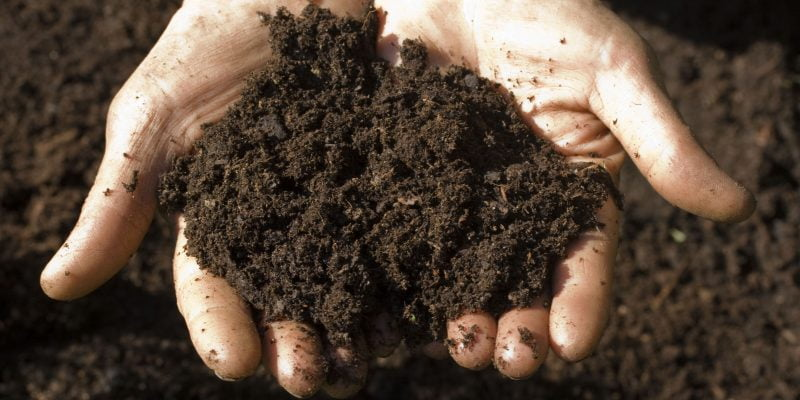How to Use a Soil Test Kit: A Guide to Your Soil Health