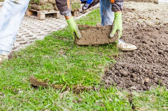 Lawn Fertilizer Burn Maintainance