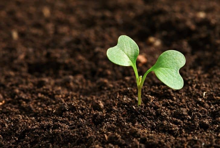 Soil and Planting
