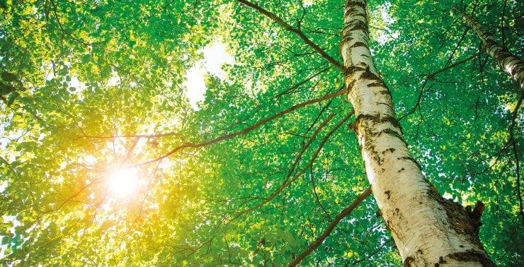 Sun Light through trees