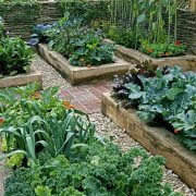 Vegetable Gardening for Beginners: Things to Keep in Mind