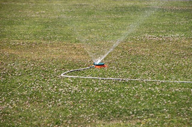 Watering of the Patch