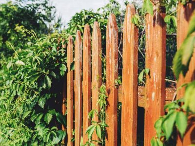 What Can I Put Up Instead of a Fence?