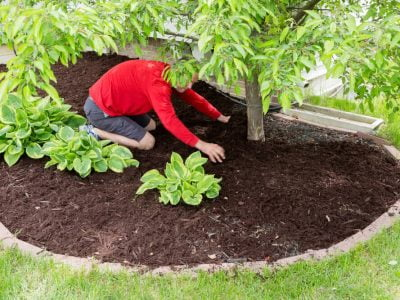 What is Mulch? - A Brief Discussion About Mulching