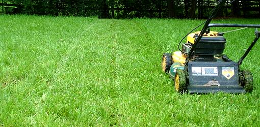 What is the Best Height to Cut Grass?