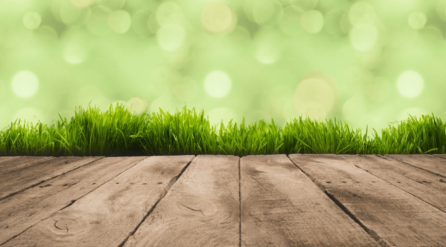 What is the Best Height to Cut Grass