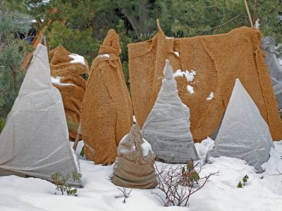 Winter Plant Protection: Hacks and Ideas