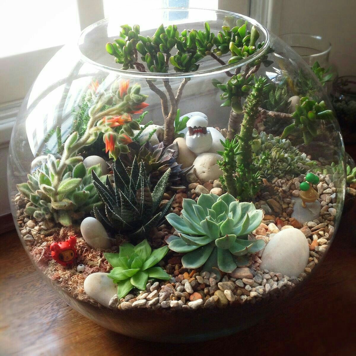 15 Of The Best Succulent Terrarium Ideas Organize With Sandy