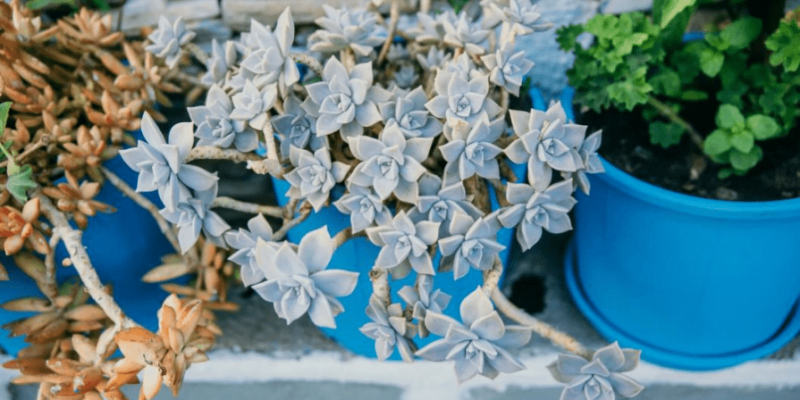 AC9 House Plants & Flowers That Cost More than You Think