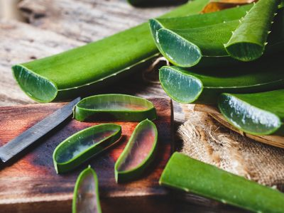 Aloe Vera Plant - Uses, Benefits, and Proper Plant Care