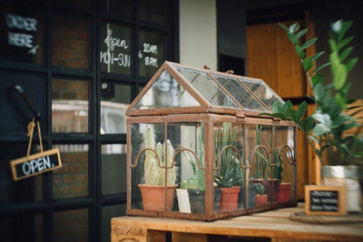 Cactus Cage