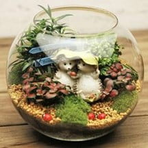 Hedgehog in a Fishbowl