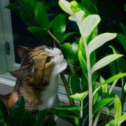 Is Succelents Poisonous to Cats? - How Succelents Affect Cats?