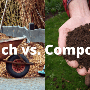 Mulch vs. Compost: What's the Difference & Which is the Best