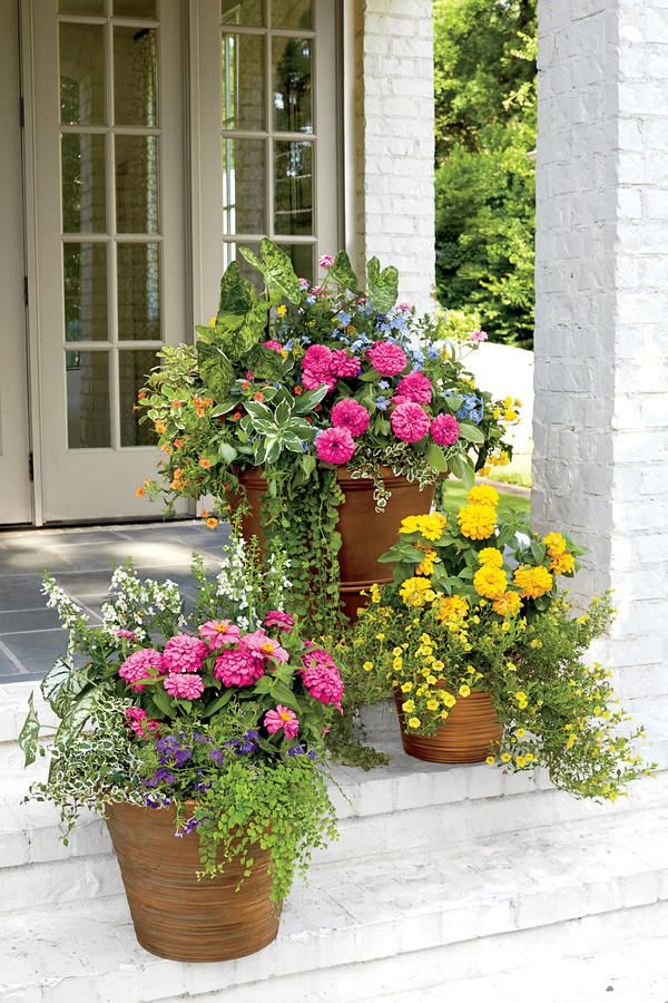 Opt for Container Gardens