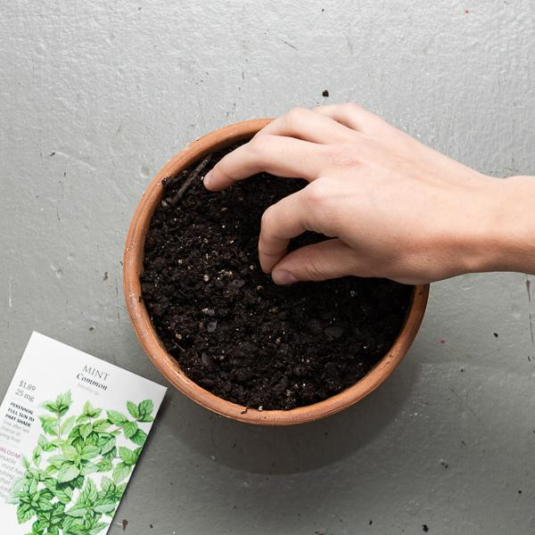 Plant your Seed