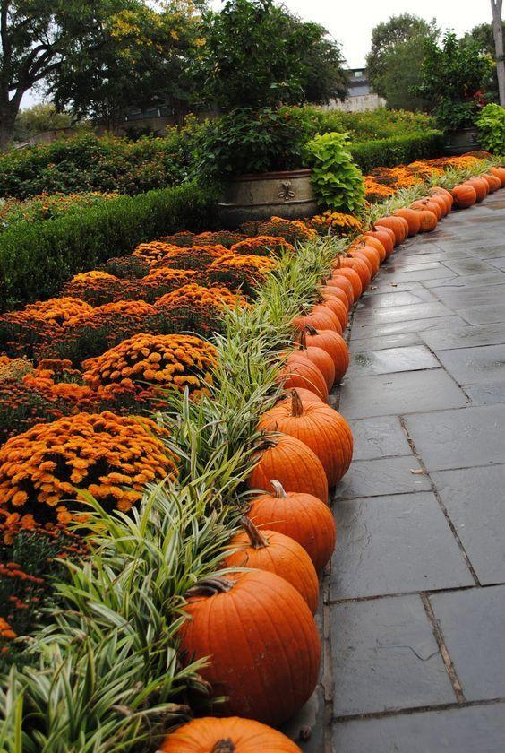 Plants and Pumpkins
