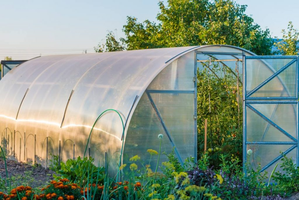 Poly-Tunnel Greenhouse