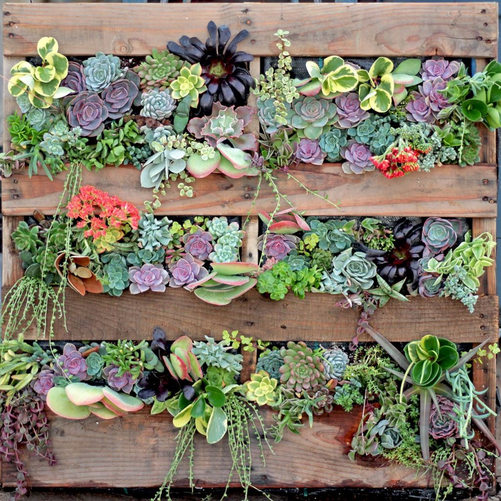 Succulents on Wooden Pallets