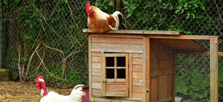 Traditional Chicken Coop Door
