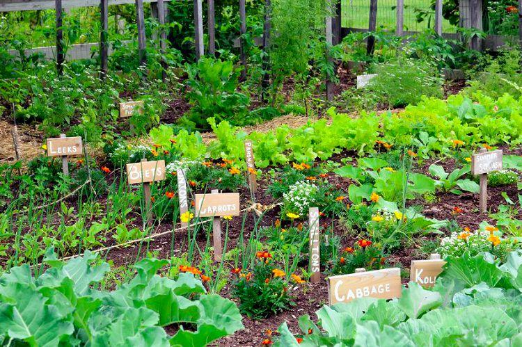 Vegetable Gardening 2