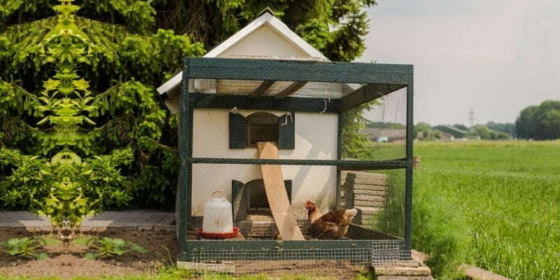 What is a Chicken Coop? A Protective Space for Your Poultry