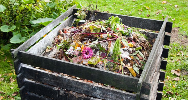 What to Compost Around the House