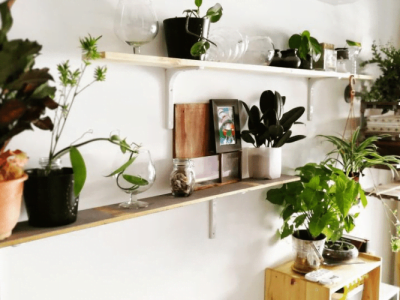 12 DIY Plant Stands & Shelves to Showcase Your Indoor Garden