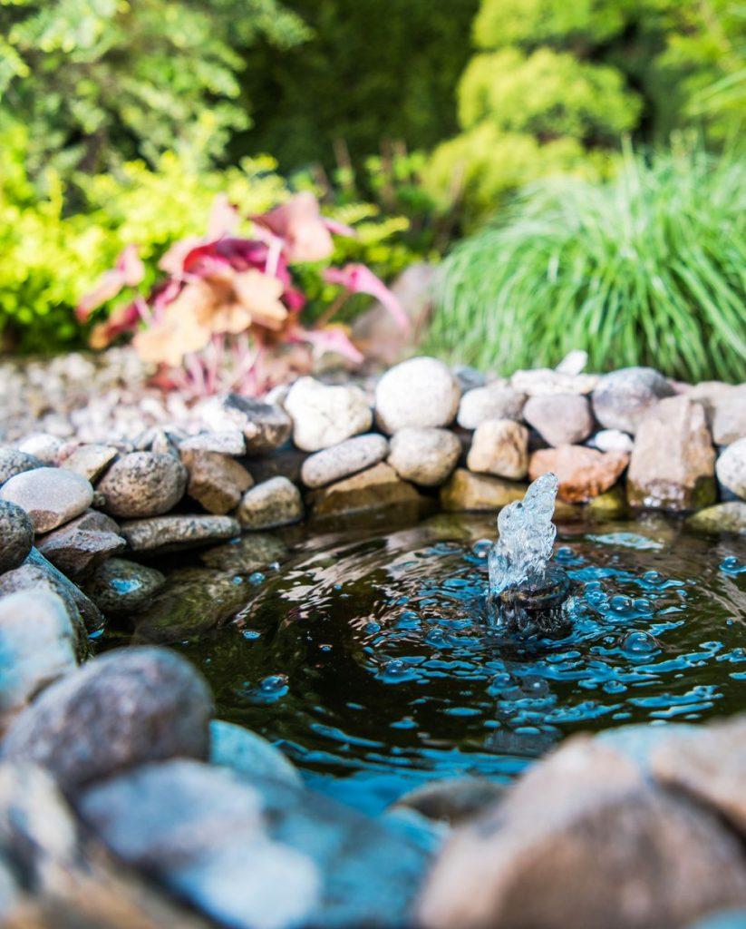A Pond DIY