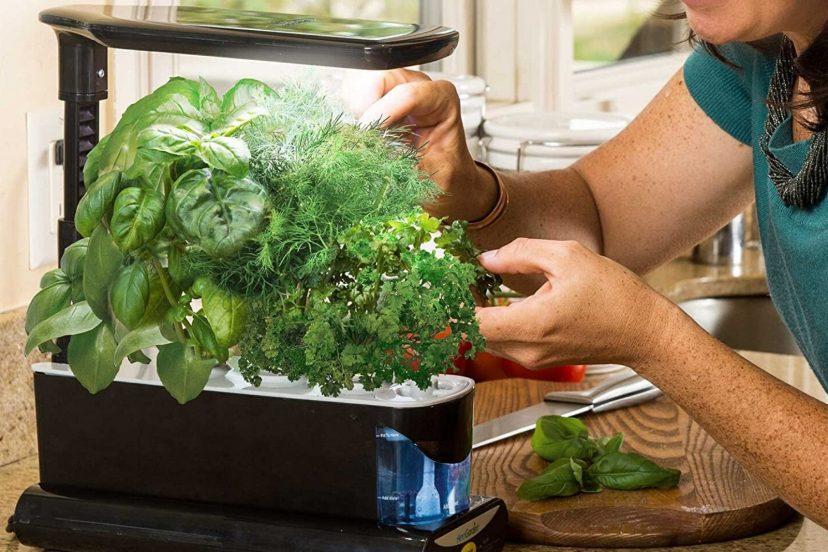 Aero Garden Sprout LED