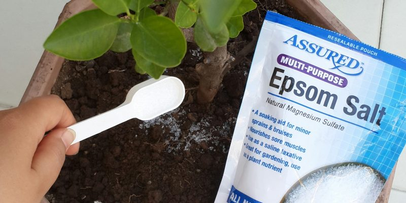 Are Epsom Salts Good for Your Garden