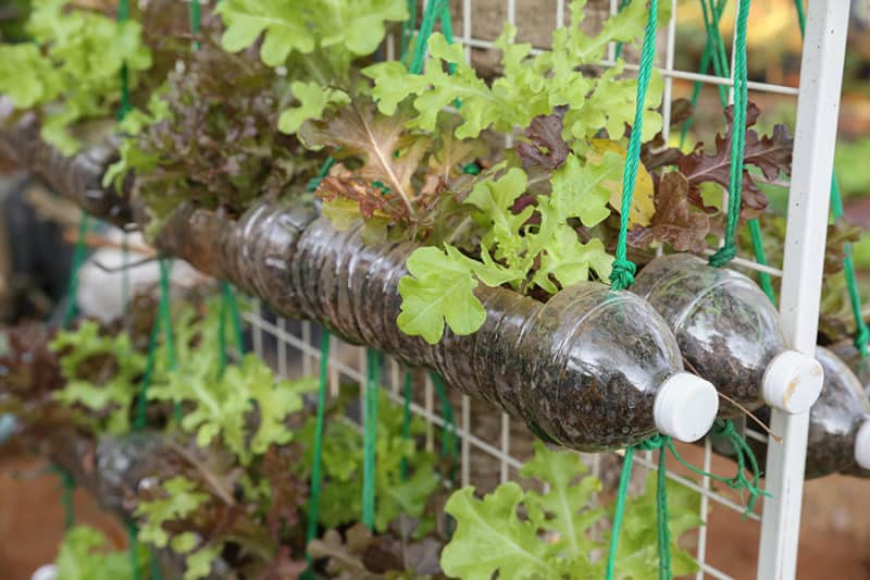 Bottle Tower Gardening
