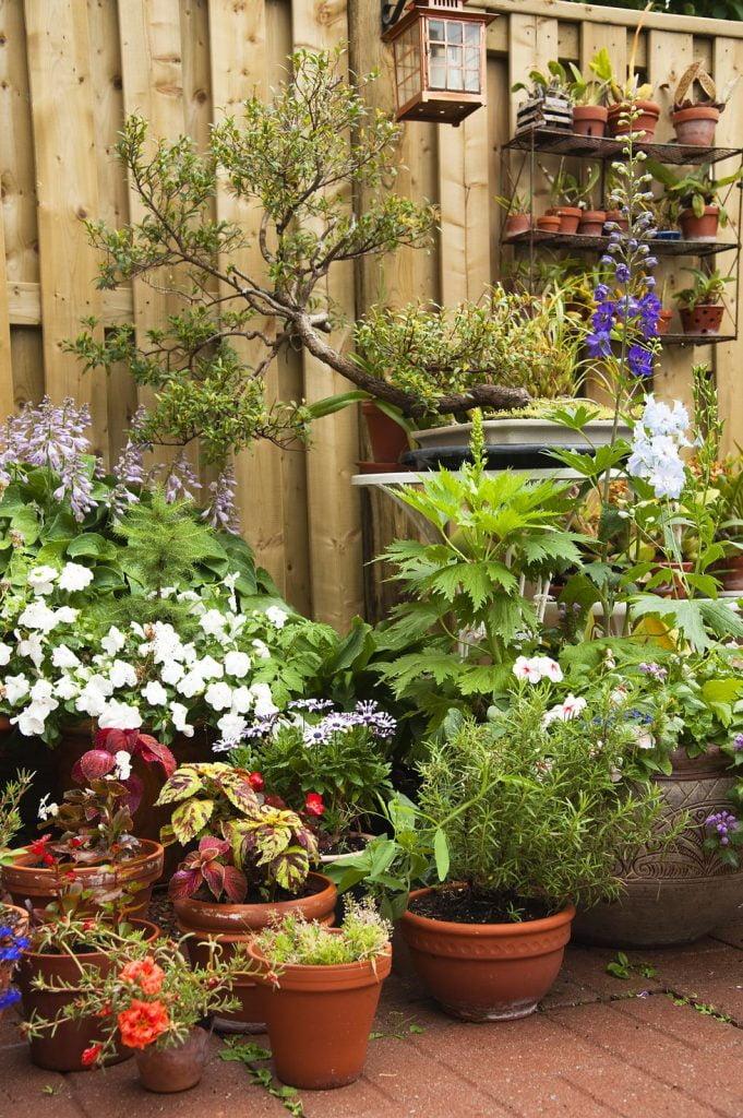 Garden Cum Fence