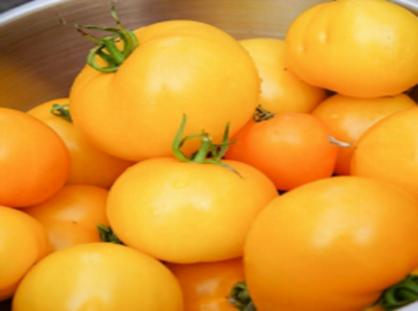 Jubilee Tomato