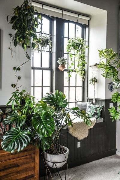 Loaded Window Indoor Garden