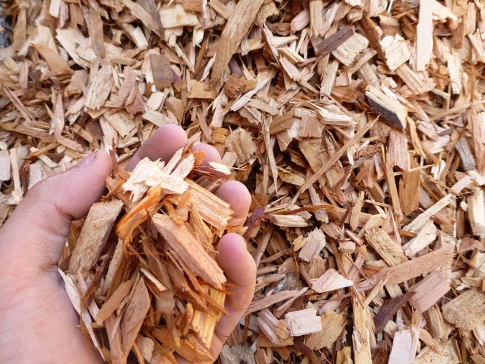 Pine or Cedar Shaving