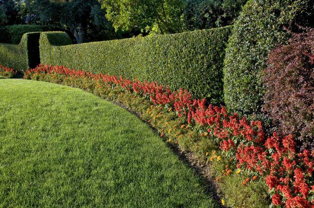 Seeping Hedges