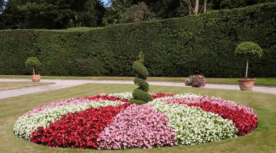 Unique Hedge Design