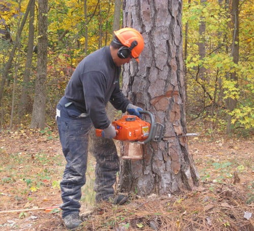 Using Chainsaw on Tree
