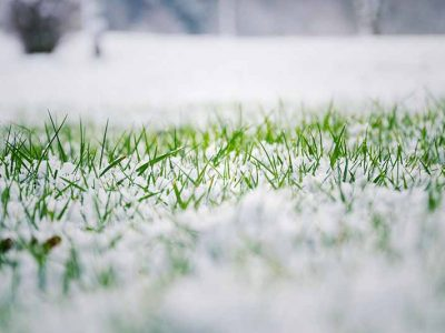 Winter Lawn Care Tips to Keep Your Lawn Healthy and Green!